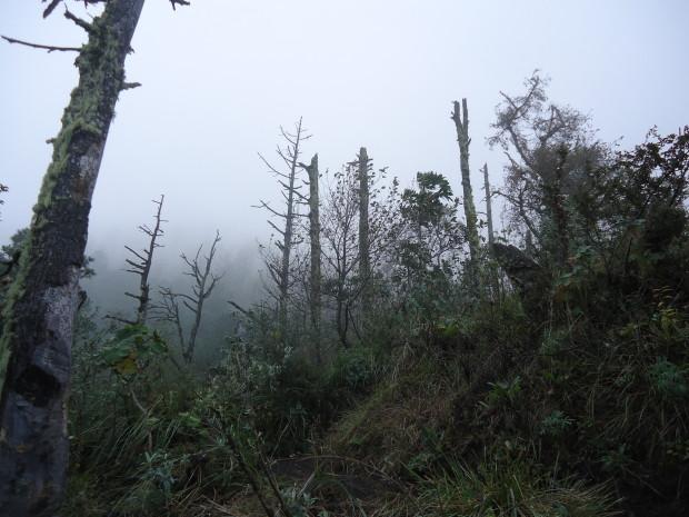 im17 - volcan de acatenango