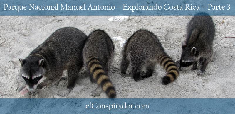 Banda de mapaches gángsters #Haha